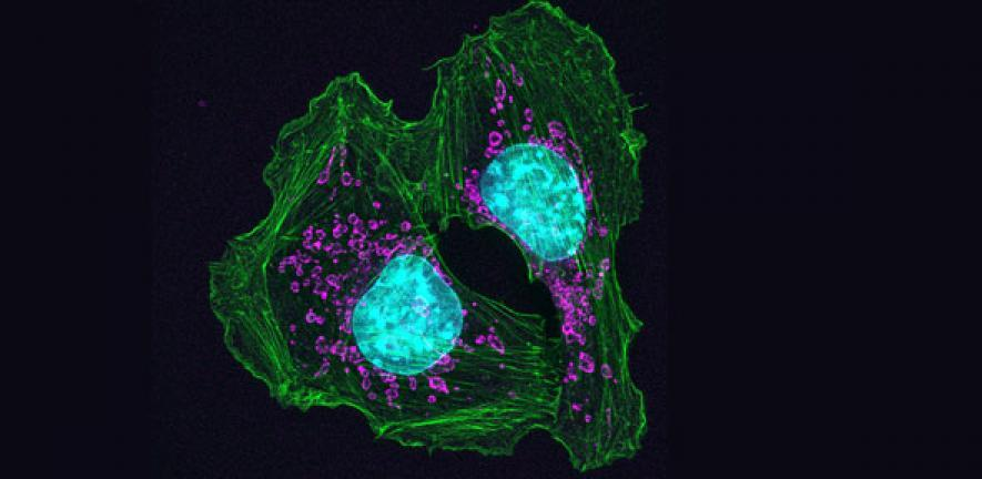 image of cell